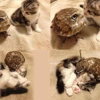 """I love you weird feather cat"""