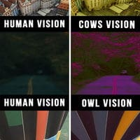 How we vision the world VS how other animals do