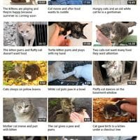 Wholesome cat Youtube channel