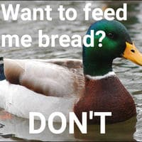 Ducks get nearly zero nutrition from bread. It fills them up and they do not benefit