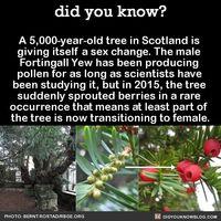 Trans grandma tree