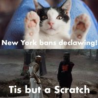 New York bans Cat Declawing!