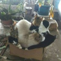 This box can fit so many cats