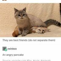 An angry pancake