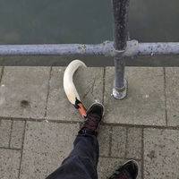 Footgoose