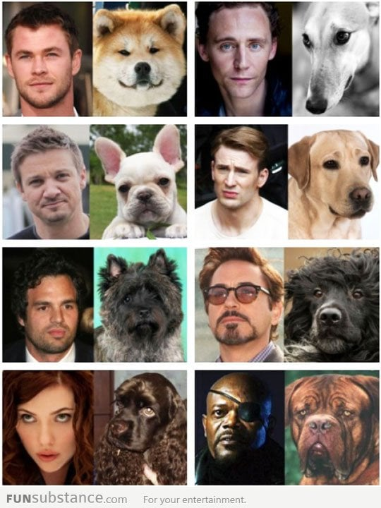 Dogs That Look Like The Avengers...