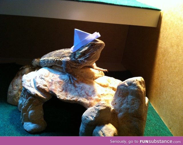 I have a major project due tomorrow, so I made a hat for my lizard