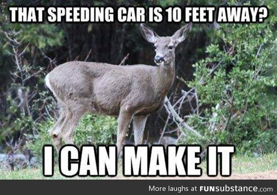 The thinking process of a deer