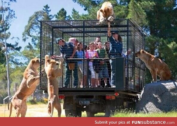 A Zoo in New Zeland locks up visitors instead of animals