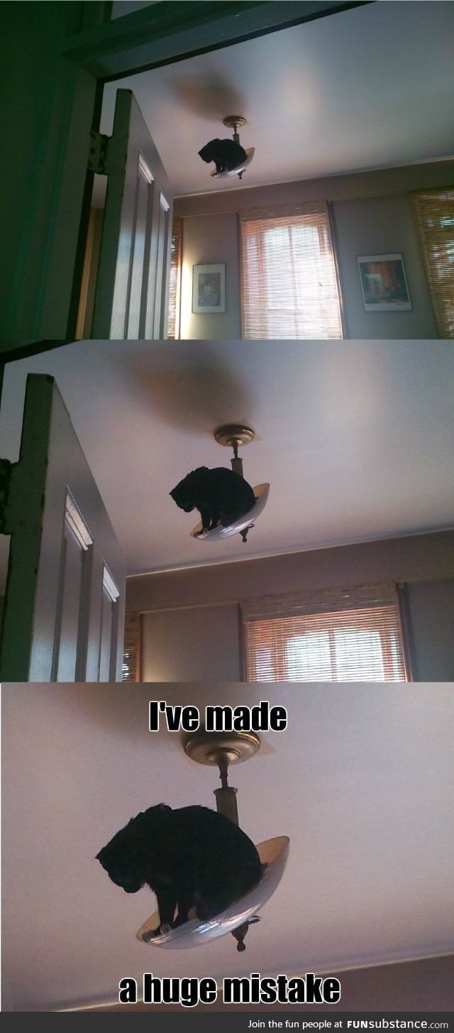 Most cats see elevated surfaces in your home as challenges.