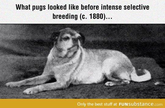 Old Fashioned Dog Breeds