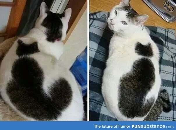 This cat has a cat on it!
