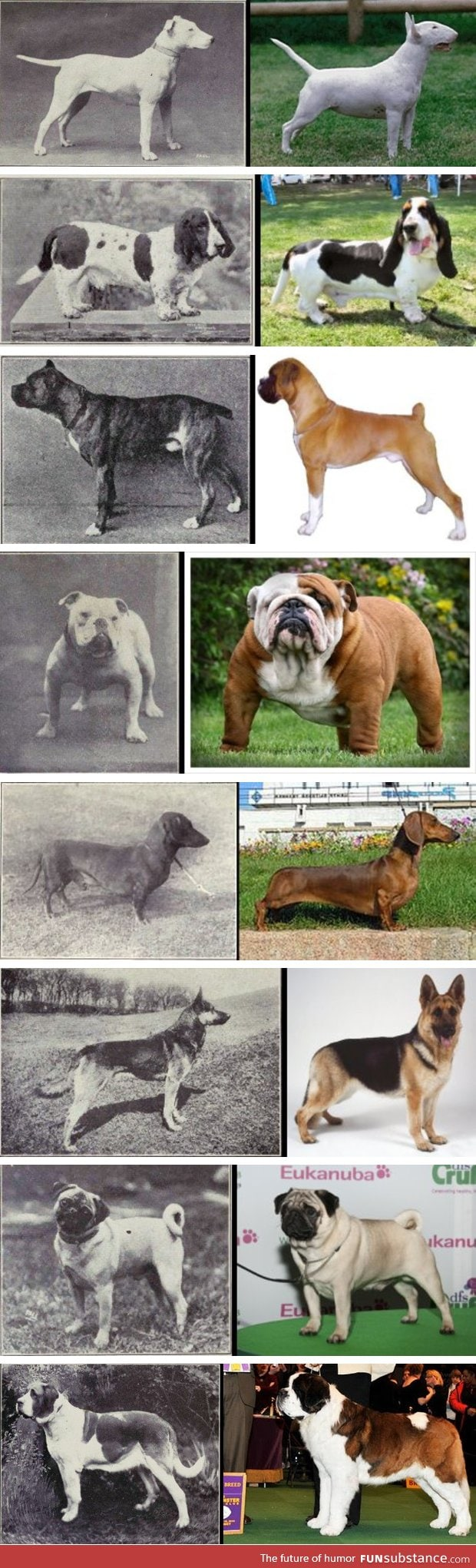 "100 years of dog breed ""improvement"""