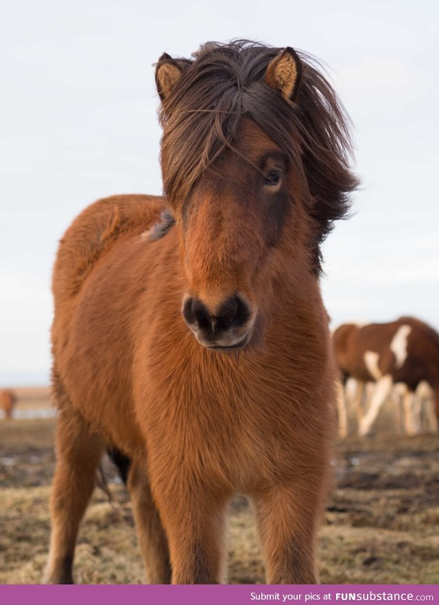 This horse has beautiful hair