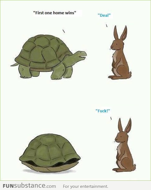 This time the tortoise wins