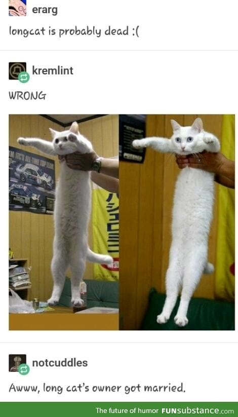 LONGCAT LIVES ON