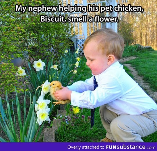 This kid loves his pet chicken