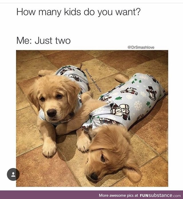 Puppies are better than human babies funsubstance for How many kids do dog and beth have
