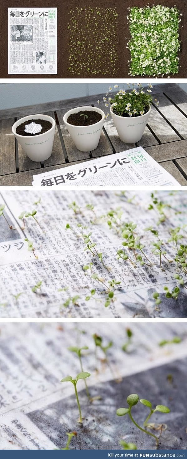 Japan is adding seeds to their newspapers so they can become plants again after use