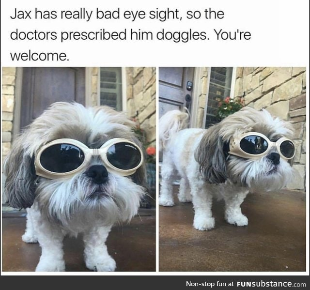 Doggo wears doggles