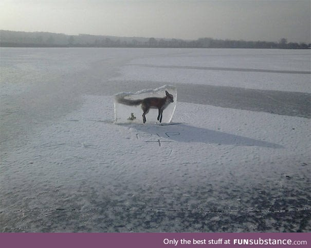 Guard put this frozen fox to warn people on the lake