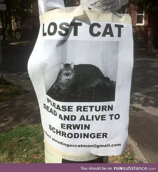 Help us find this cat