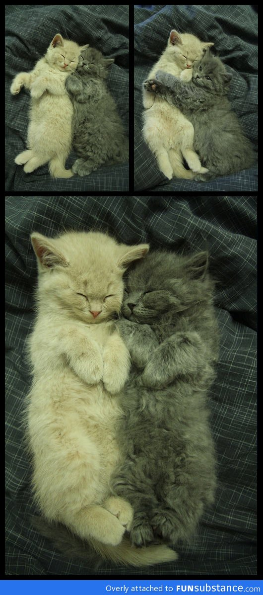 Kitty buddies