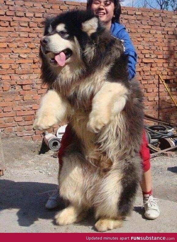 Half Dog Half Lion 47205.jpg