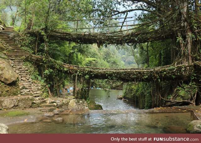 A 2 level Living Root Bridge, Cherrapunjee, North Eastern India