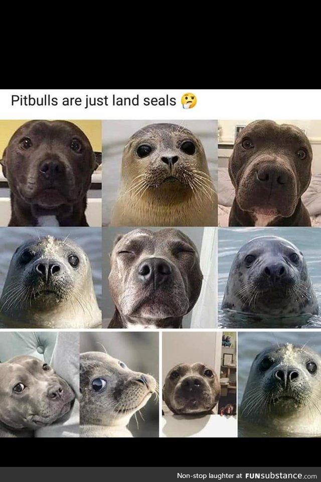 Pit Bulls are just land seals