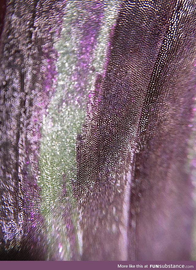 An up-close shot of a wandering Jew leaf