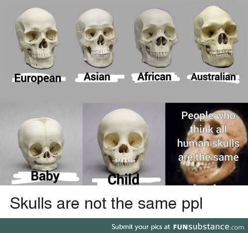 All humans skulls are the same