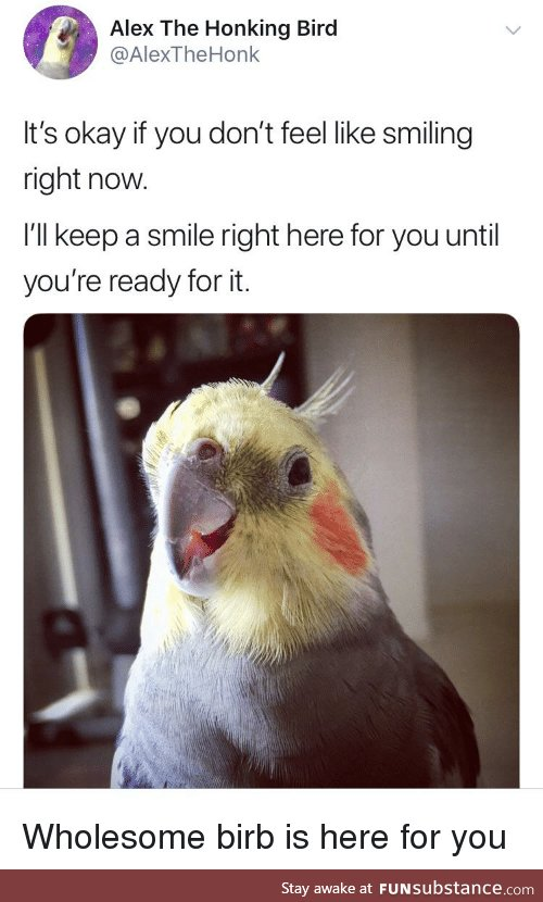 It's okay, wholesome birb will save the day