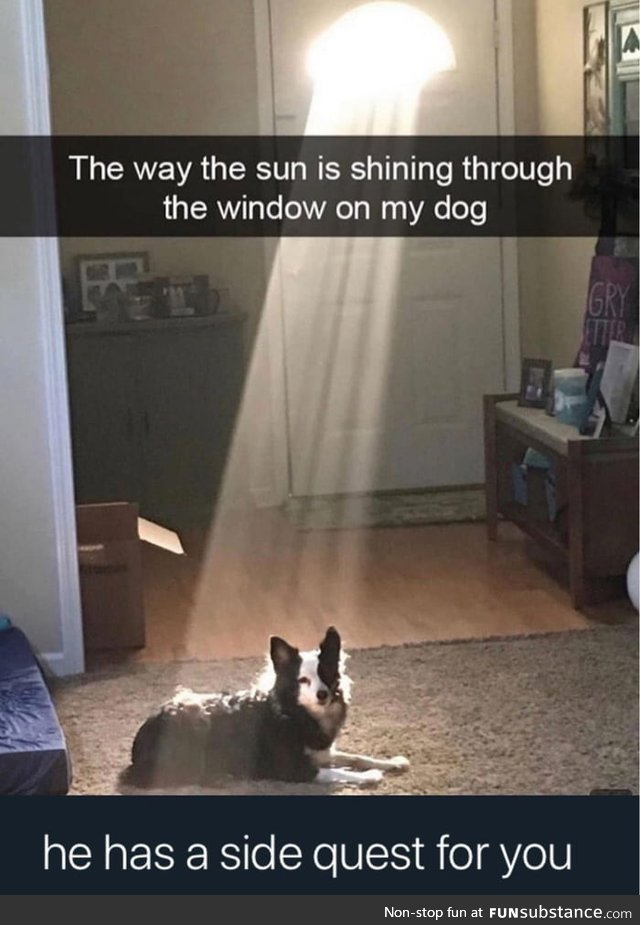 The dog has a quest for you