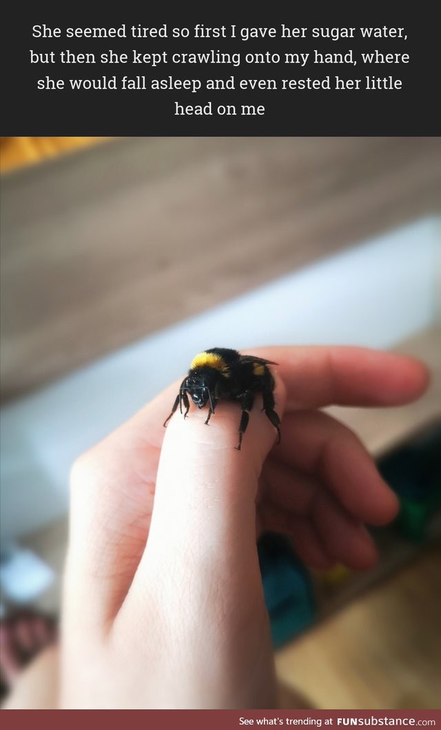 I rescued a tired bumblebee and she kept falling asleep on my hand