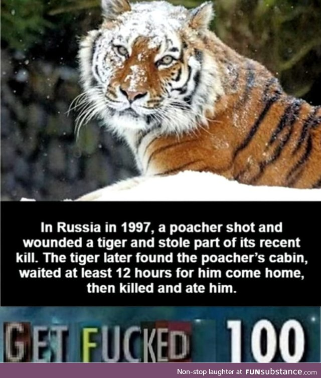 Don't mess with a TIGER
