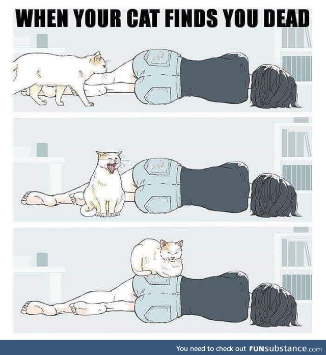 When your cat finds out you dead