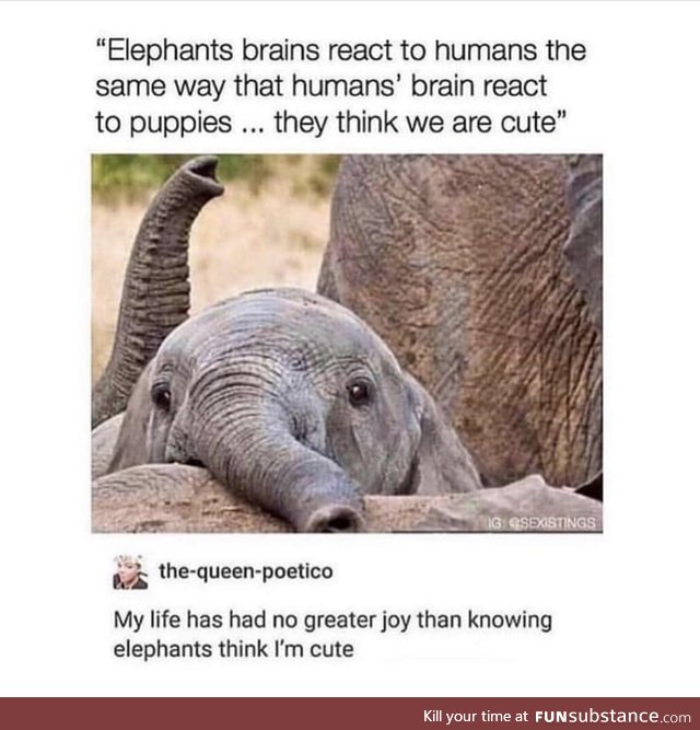 Elephants think we're cute!