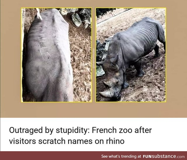 Scratching your name on a Rhinoceros