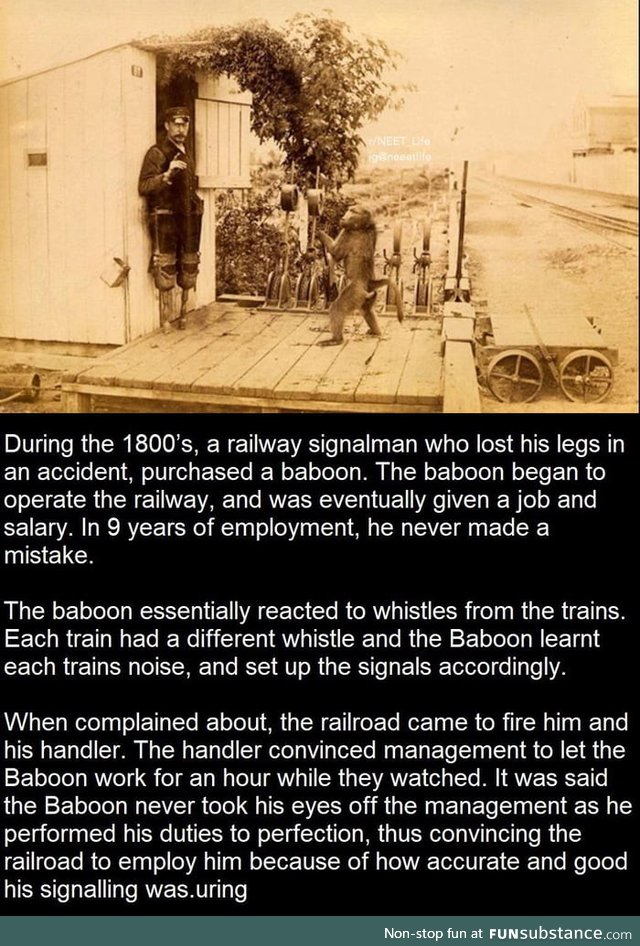 Railway Signal man lost his legs and a Monkey learned his job