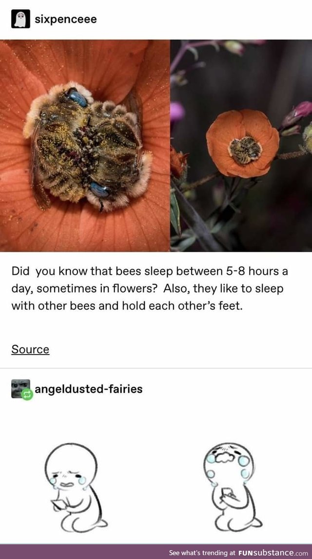 Bees are so freaking cute, BTW