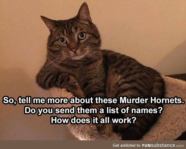 Do the murder hornets carry tiny notebooks to write the names in?
