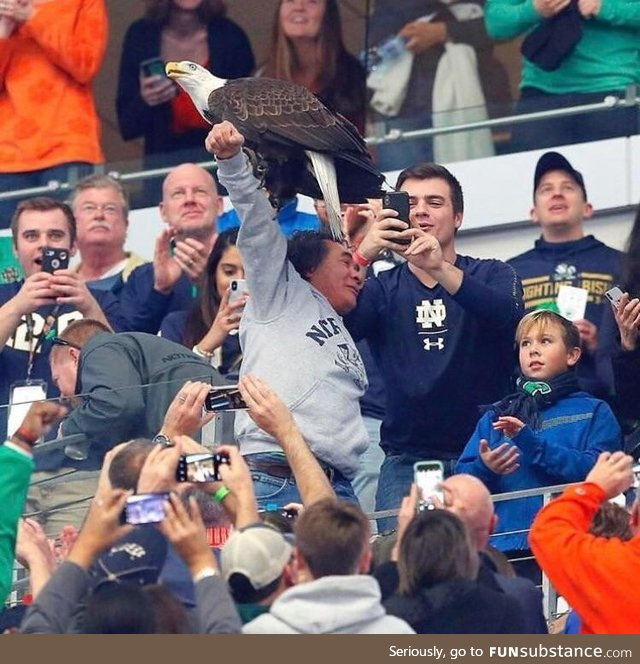 A bald eagle landing on a fan during a college football game!
