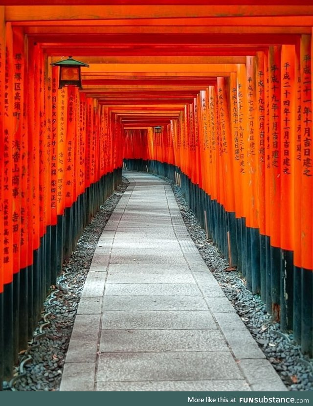 Tori gates at the Fushimi Inari shrine, ????????