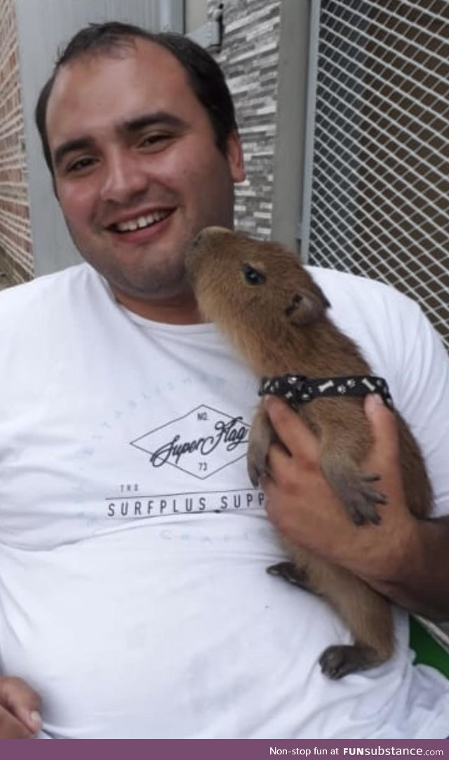 This is my friend's pet nutria named Lola. She's really affectionate