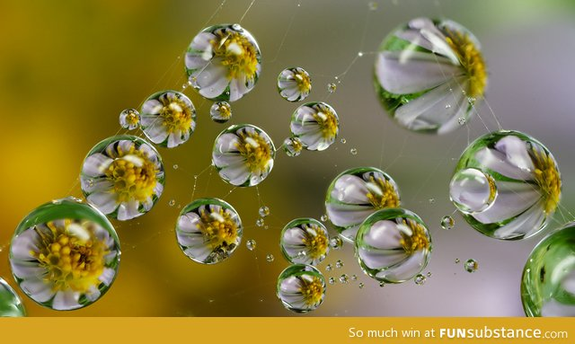 Flowers refracted within dew drops