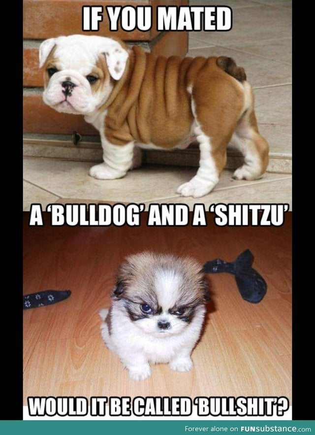 A bulldog and a shitzu mixed what would it be called ...