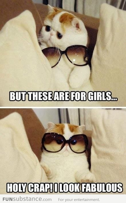 Cat wears sunglasses