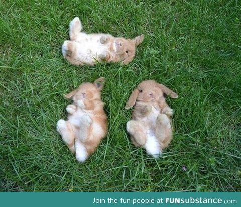 If you're ever sad, just think about these bunnies cloud watching ^~^
