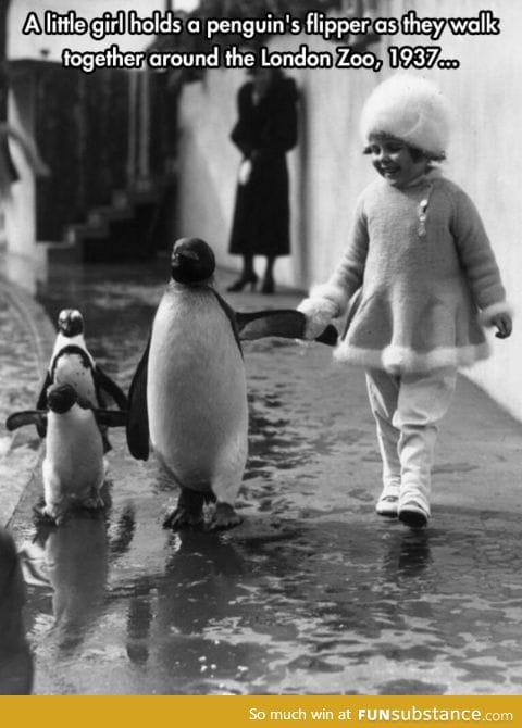 I want to go for a walk with a penguin